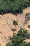 deforestation for oil palm -- sabah_2206