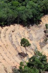 deforestation for oil palm -- sabah_2209