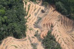 deforestation for oil palm -- sabah_2210