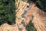 deforestation for oil palm -- sabah_2215