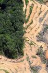 deforestation for oil palm -- sabah_2216