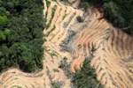 deforestation for oil palm -- sabah_2217