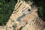 deforestation for oil palm -- sabah_2219
