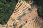 deforestation for oil palm -- sabah_2221