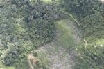 deforestation for oil palm -- sabah_2223