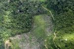 deforestation for oil palm -- sabah_2225