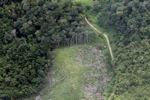 deforestation for oil palm -- sabah_2230