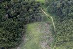 deforestation for oil palm -- sabah_2230