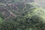 Oil palm estate -- sabah_2231