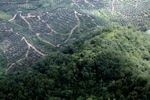 Oil palm estate -- sabah_2233