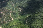 Oil palm estate -- sabah_2242