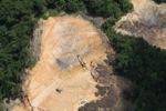 Deforestation in Borneo -- sabah_2266