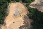 Deforestation in Borneo -- sabah_2268