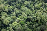 Malaysian Borneo forest -- sabah_2282