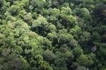 Rainforest in Malaysian Borneo -- sabah_2283