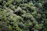Rain forest in Malaysian Borneo -- sabah_2284