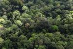Jungle in Malaysian Borneo -- sabah_2285