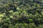 Malaysian Borneo forest -- sabah_2289