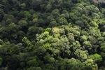 Forest in Sabah -- sabah_2291