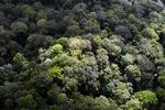 Forest in Sabah, Malaysia -- sabah_2292