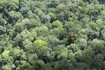 Borneo rainforest -- sabah_2293
