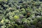 Borneo rainforest -- sabah_2294