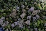 Borneo rainforest in Sabah -- sabah_2298