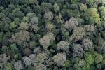 Rainforest in Borneo -- sabah_2300