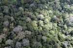 Rain forest in Borneo -- sabah_2301