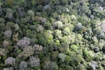 Malaysian Borneo forest -- sabah_2303