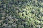 Rain forest in Malaysian Borneo -- sabah_2305