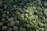 Jungle in Malaysian Borneo -- sabah_2306