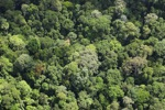 Jungle in Borneo -- sabah_2308