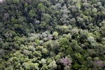 Malaysian Borneo forest -- sabah_2310