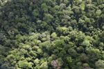 Forest in Sabah -- sabah_2312