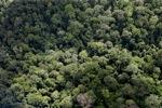 Forest in Sabah, Malaysia -- sabah_2313