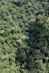 Borneo rain forest -- sabah_2315