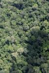Borneo rainforest in Sabah -- sabah_2317