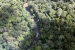 Borneo forest -- sabah_2318