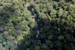 Rainforest in Borneo -- sabah_2319
