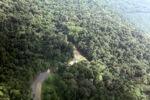 Oil palm estate -- sabah_2329