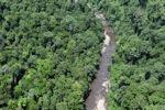 Rain forest in Borneo -- sabah_2339