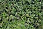 Malaysian Borneo forest -- sabah_2341