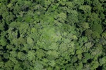 Rainforest in Malaysian Borneo -- sabah_2342