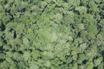 Rain forest in Malaysian Borneo -- sabah_2343