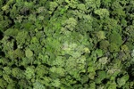 Ancient lowland forest in Borneo