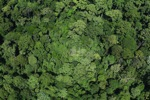 Old-growth lowland forest in Borneo