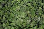 Malaysian Borneo forest -- sabah_2348