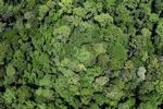 Forest in Sabah -- sabah_2350