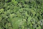 Forest in Sabah, Malaysia -- sabah_2351